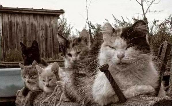 おもしろい猫の画像・写真-やっちまいな