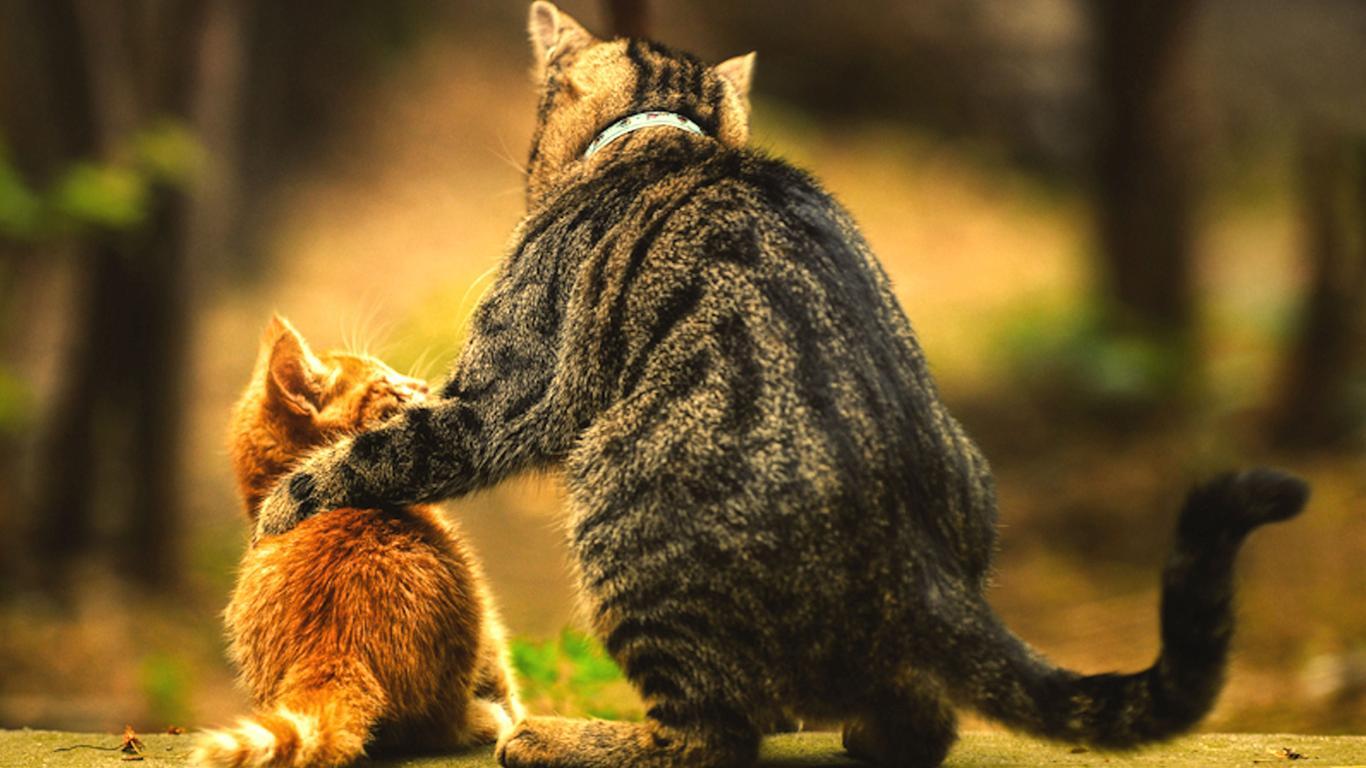 励ます大人猫