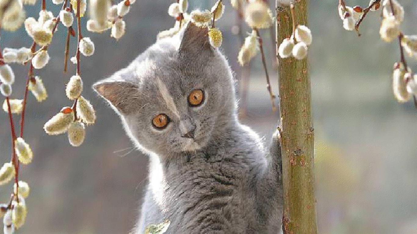 Красивые картинки мартовские коты
