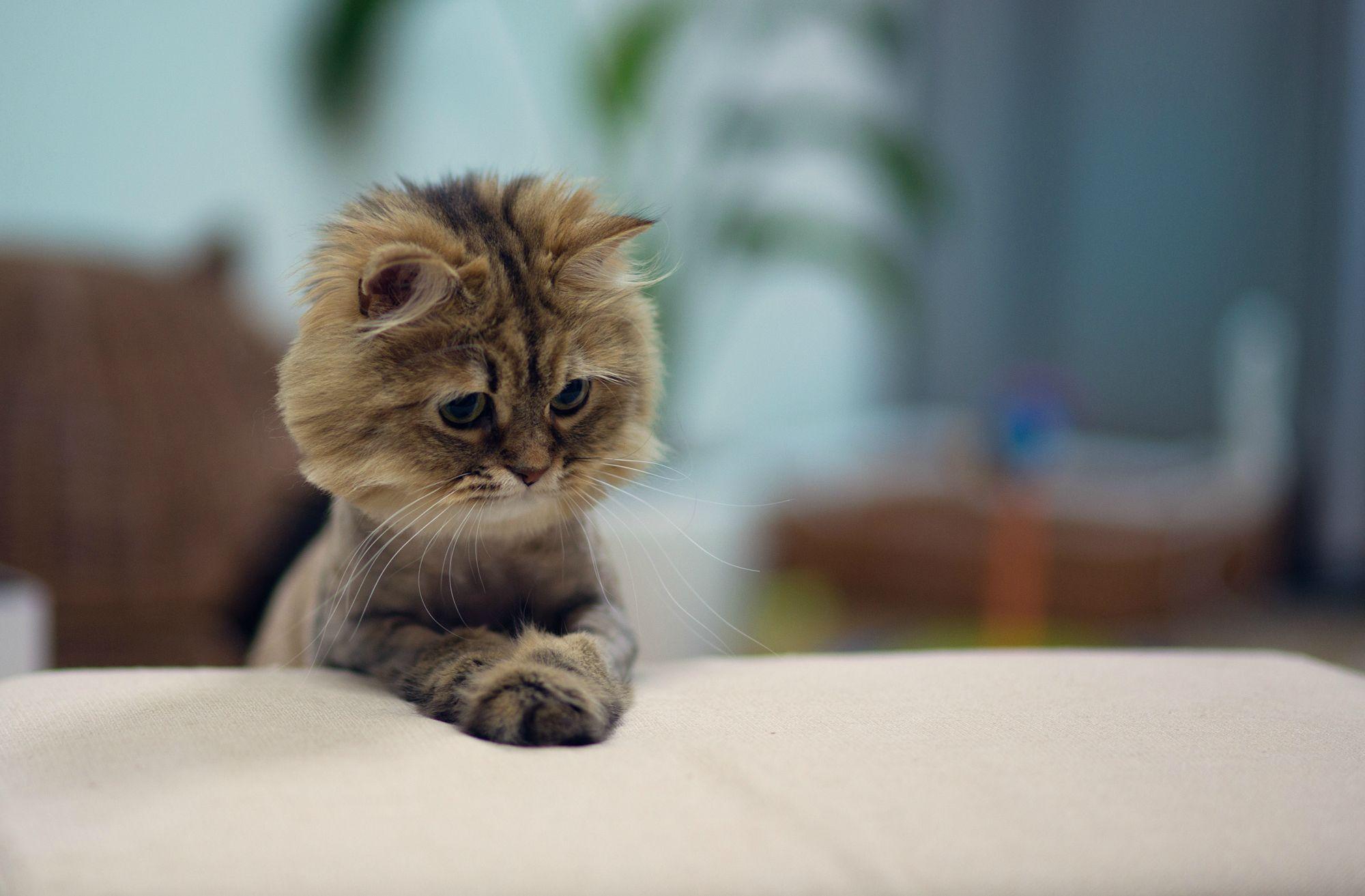 猫の写真-しょんぼり サイトトップへ戻る Sponsored Link  癒しの猫画像館/写真N