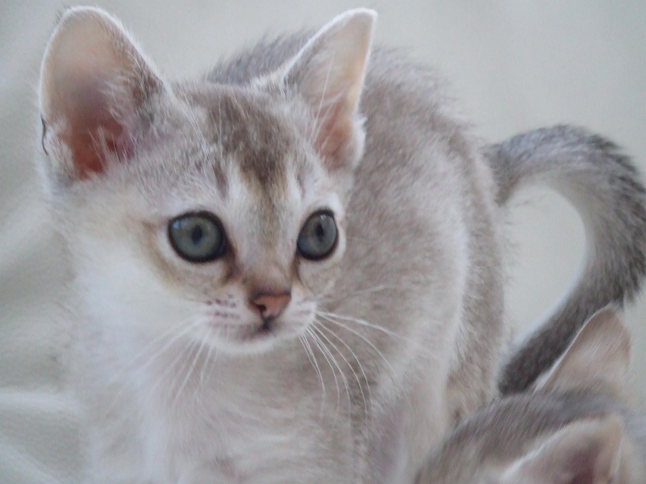 癒しの猫画像館 フォトno 26